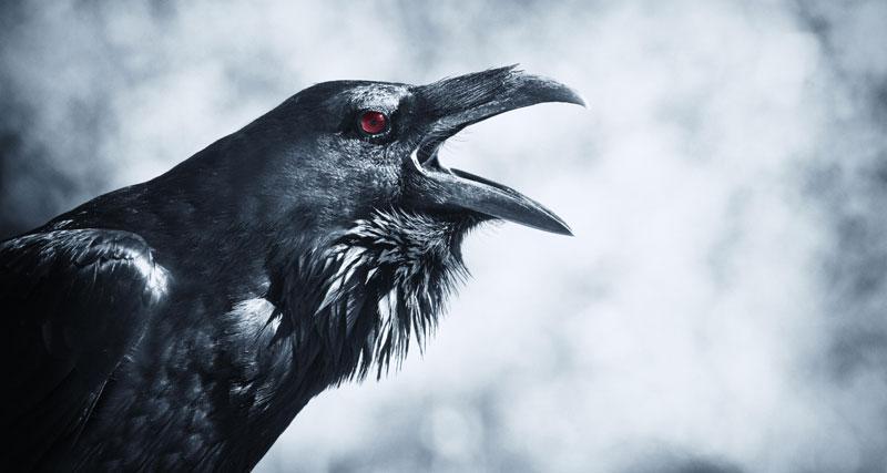 Birds in Macbeth Essay